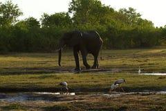 La poussière d'éléphants africains se baignant sur les plaines Images libres de droits