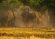 La poussière d'éléphants africains se baignant sur les plaines Photos stock
