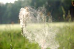 La poussière d'herbe et de fleur Photo libre de droits