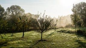 La poussière de matin Image libre de droits