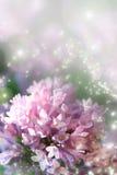 La poussière féerique sur le lilas Photos stock
