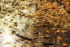 La pozza gialla di autunno sporco è vicina fotografia stock libera da diritti