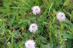 La pradera del campo floreció en primavera fotografía de archivo libre de regalías