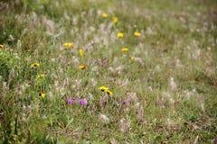 La pradera del campo floreció en primavera imagen de archivo