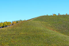 La pradera y el abedul blanco en la ladera Fotografía de archivo libre de regalías