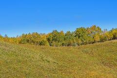 La pradera y el abedul blanco en la ladera Imagen de archivo libre de regalías