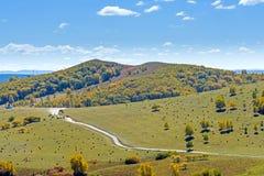 La pradera y el camino unsurfaced Foto de archivo