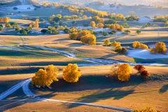 La prairie d'automne avec le coucher du soleil d'arbres Image stock