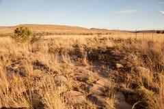 La prateria sudafricana di karoo Immagine Stock