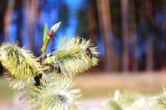 La première abeille de ressort Image stock