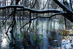 La première glace sur un étang. Photo libre de droits