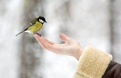 La première neige Photo libre de droits