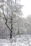 La première neige Photographie stock