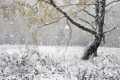 La première neige Image libre de droits