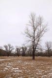 La première neige dans les bois Images libres de droits