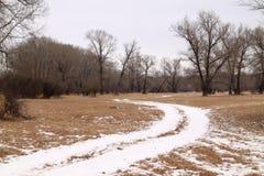 La première neige dans les bois Photos libres de droits