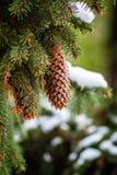 La première neige, les premières photos, hiver vient image stock