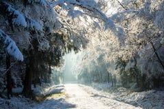 La première neige pendant l'hiver Photographie stock libre de droits