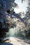 La première neige pendant l'hiver Photographie stock