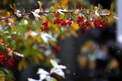 La première neige Tard en automne photos libres de droits