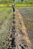 La première opération effectuent la ferme de riz Image libre de droits