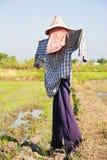 La première opération effectuent la ferme de riz Image stock