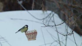La preparación superior de pájaros le entrega placer enorme del diálogo con la naturaleza en el invierno almacen de video