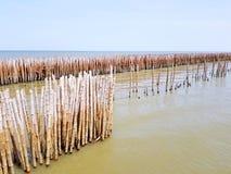 La presa de bambú hecha el ser humano y protegiendo la onda grande contra el mar o el océano y el cielo azul con el espacio de la Fotos de archivo libres de regalías