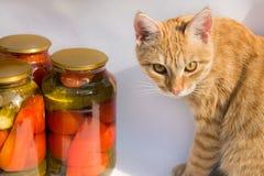 La preservación de un banco de tomates y de pepinos, el gato se está sentando Imagenes de archivo