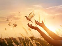 La prière de femme et l'oiseau gratuit apprécient la nature sur le fond de coucher du soleil Images stock