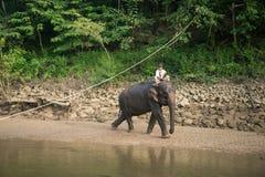 La prima colazione dell'elefante Fotografie Stock