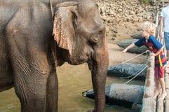 La prima colazione dell'elefante Fotografia Stock Libera da Diritti