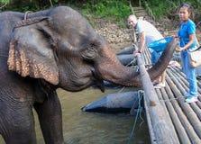 La prima colazione dell'elefante Immagine Stock