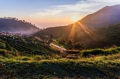 La prima luce del giorno sull'azienda agricola della fragola del angkhang Fotografie Stock