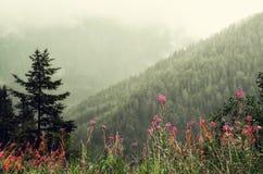 La prima molla fiorisce sul fondo delle montagne delle alpi nel giorno nuvoloso Copi lo spazio Primavera, estate, concetto di via Fotografie Stock Libere da Diritti
