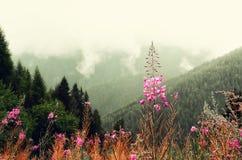 La prima molla fiorisce sul fondo delle montagne delle alpi nel giorno nuvoloso Copi lo spazio Primavera, estate, concetto di via Fotografia Stock