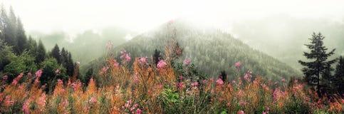 La prima molla fiorisce sul fondo delle montagne delle alpi nel giorno nuvoloso Copi lo spazio Primavera, estate, concetto di via Fotografia Stock Libera da Diritti