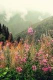 La prima molla fiorisce sul fondo delle montagne delle alpi nel giorno nuvoloso Copi lo spazio Primavera, estate, concetto di via Immagine Stock