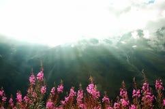 La prima molla fiorisce sul fondo delle montagne delle alpi nel giorno nuvoloso Copi lo spazio Primavera, estate, concetto di via Immagini Stock