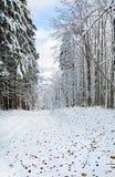 La prima neve di inverno e l'autunno scorso frondeggia in foresta Fotografia Stock
