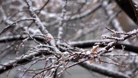 La prima neve La vista dalla finestra Inondato delle foglie di autunno stock footage