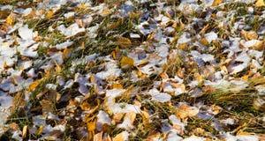 La prima neve su un'erba Immagini Stock Libere da Diritti