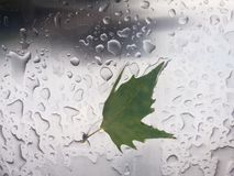 la prima pioggia di autunno fotografie stock libere da diritti