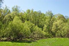 La prima sorgente si inverdice sopra il piccolo fiume Immagini Stock Libere da Diritti