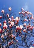 La primavera è immagine stock