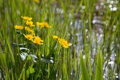 La primavera è bagnata Immagini Stock