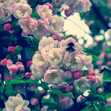 La primavera è IV venente Immagine Stock