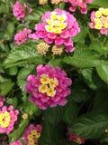 La primavera è nella fioritura! Fotografia Stock