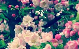 La primavera è V venente Immagini Stock Libere da Diritti