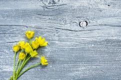 La primavera amarilla florece el ramo en el viejo fondo gris de madera pintado, espacio de la copia Foto de archivo libre de regalías